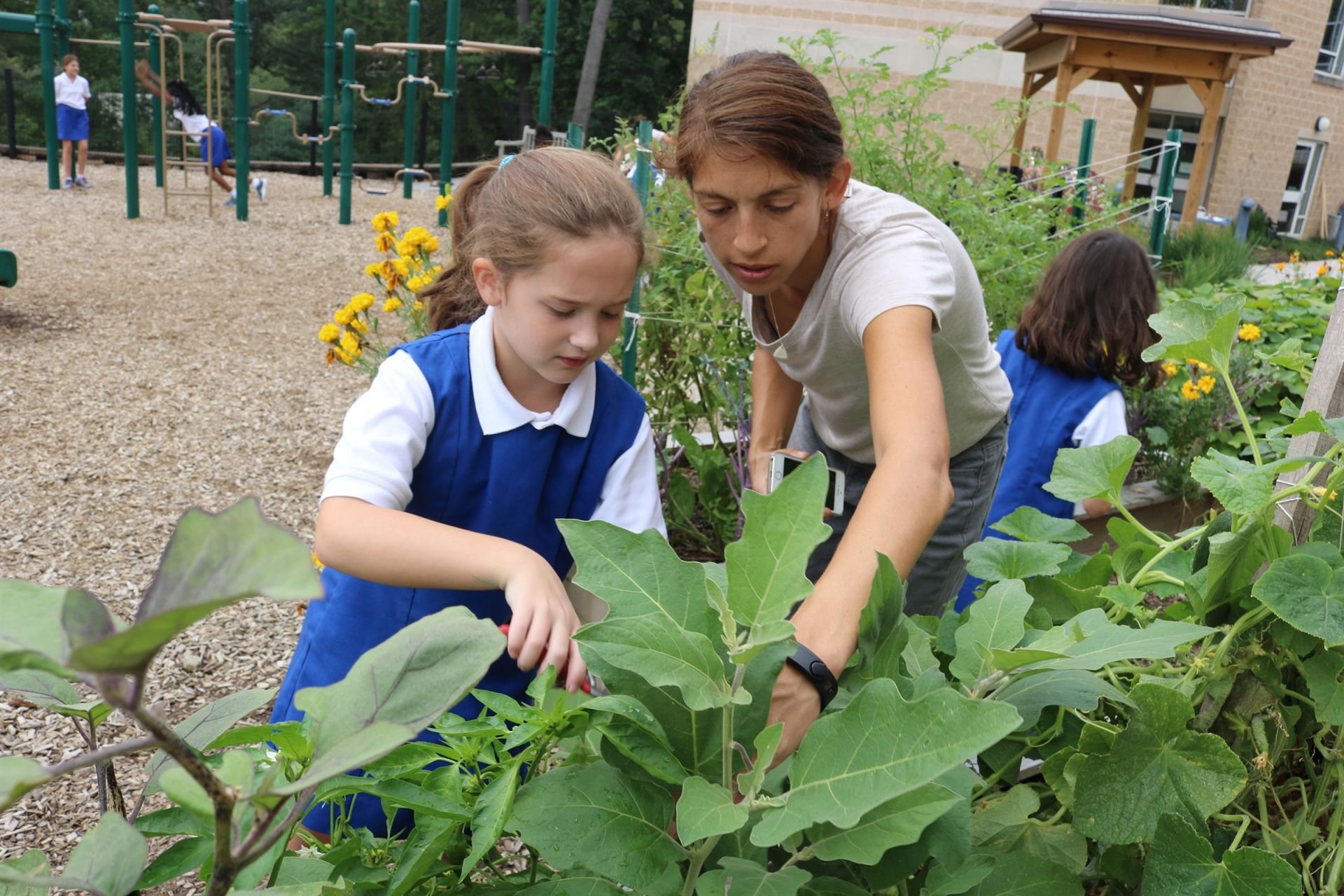 The Lower School is preparing for their annual fall feast by harvesting vegetables and herbs that were planted by students last February in the Webb Centennial Courtyard, one of our six gardens here on campus! Vegetables and herbs harvested include squash, tomatoes, cucumbers, peppers, holy basil, eggplants, mint, rosemary, hibiscus and ground cherries! The students learn about the process of gardening and harvesting. They then learn how to prepare the fresh vegetables and herbs to create delicious and healthy meals.