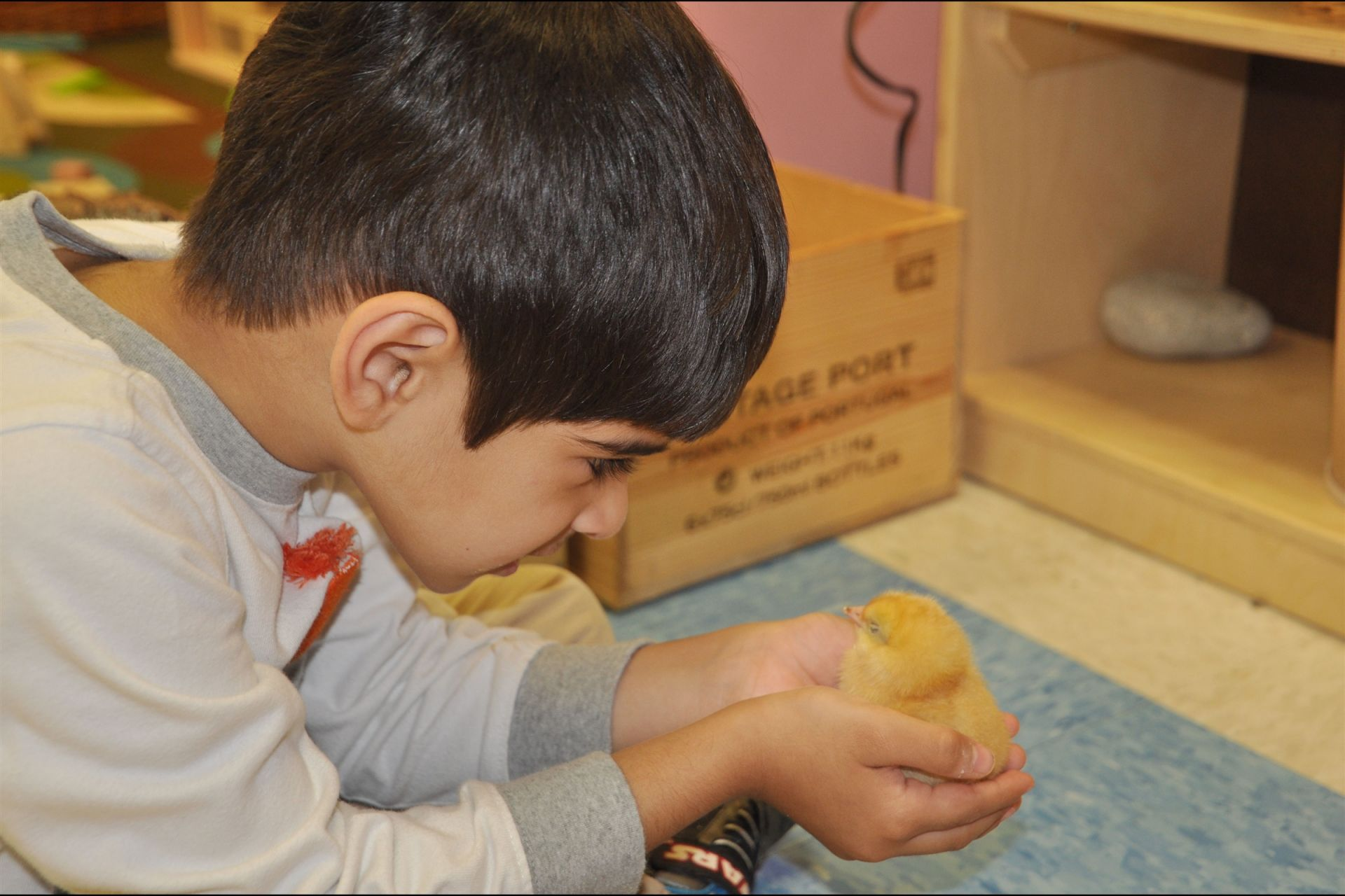"The chickens have hatched! From egg incubator to brooder box, the Preschool 4s class has been nurturing 12 chickens in their classroom. Teachers have been documenting student predictions and observations each day throughout this exciting learning process: ""We have to keep them safe,"" ""They are sleeping in the egg and they are growing,"" and ""I will wrap him up in my hands and cover him up so he will not catch a cold."""