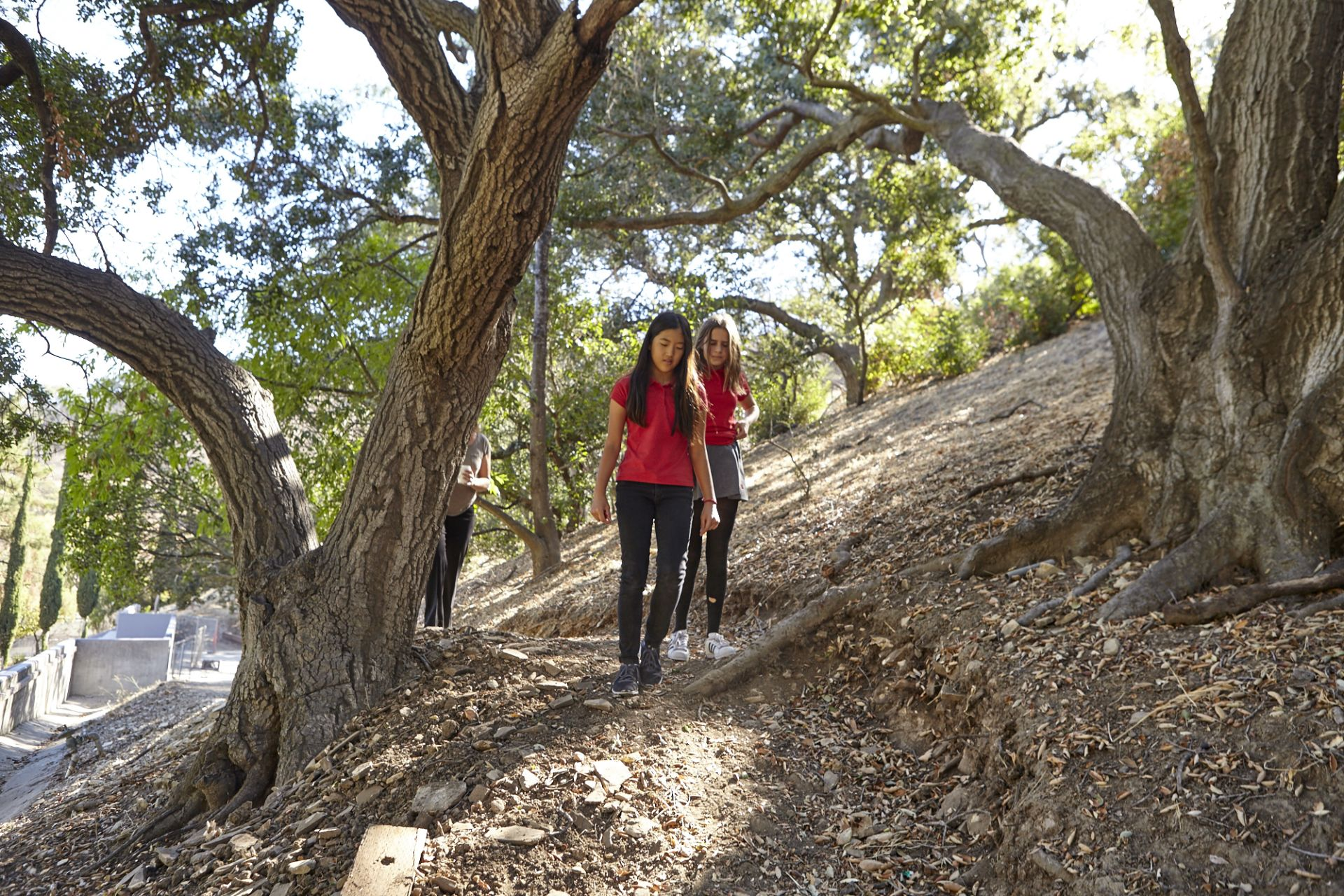 Buckley's Nature Trail is a 1/3-mile loop that skirts Fossil Ridge Park. Students are able to write poetry, practice landscape painting, collect environmental data and more, right in our own backyard.