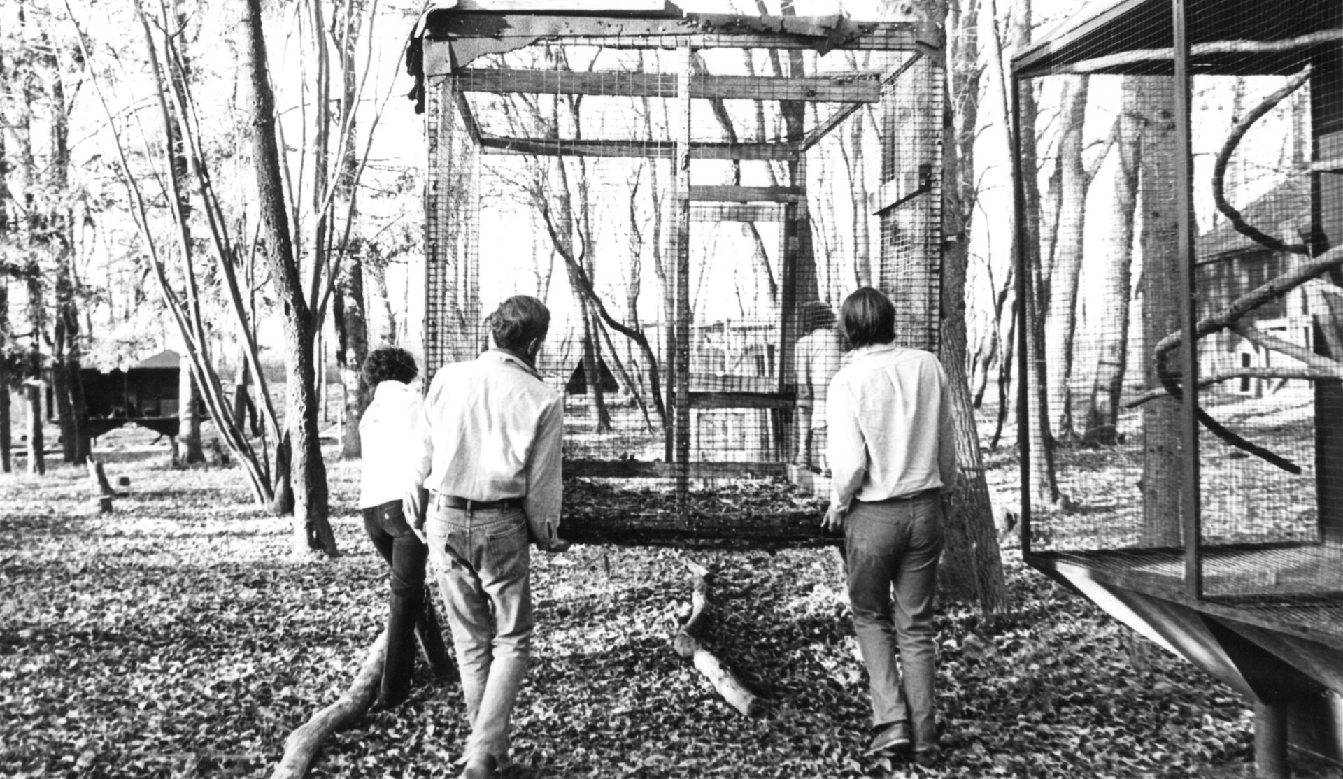 Students installing an enclosure at the Trevor Zoo in 1975