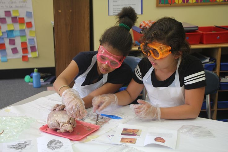 Grade 5 English Class Disect Pig Hearts