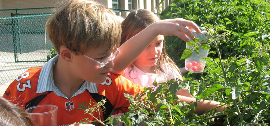Where can students learn about plants, insects, homegrown food and more? In the Graland garden -- where they can name the produce in Spanish and make salsa from the harvest.