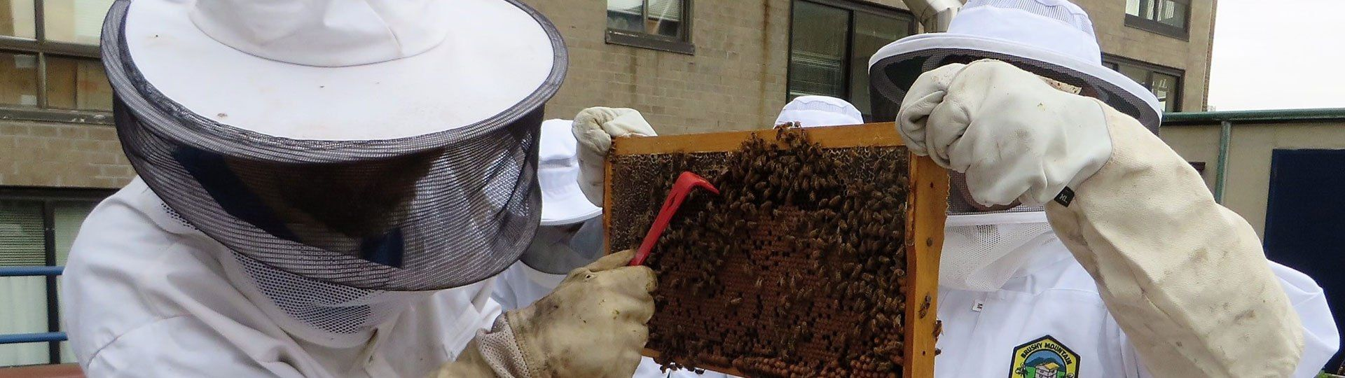 York Prep beekeeping club