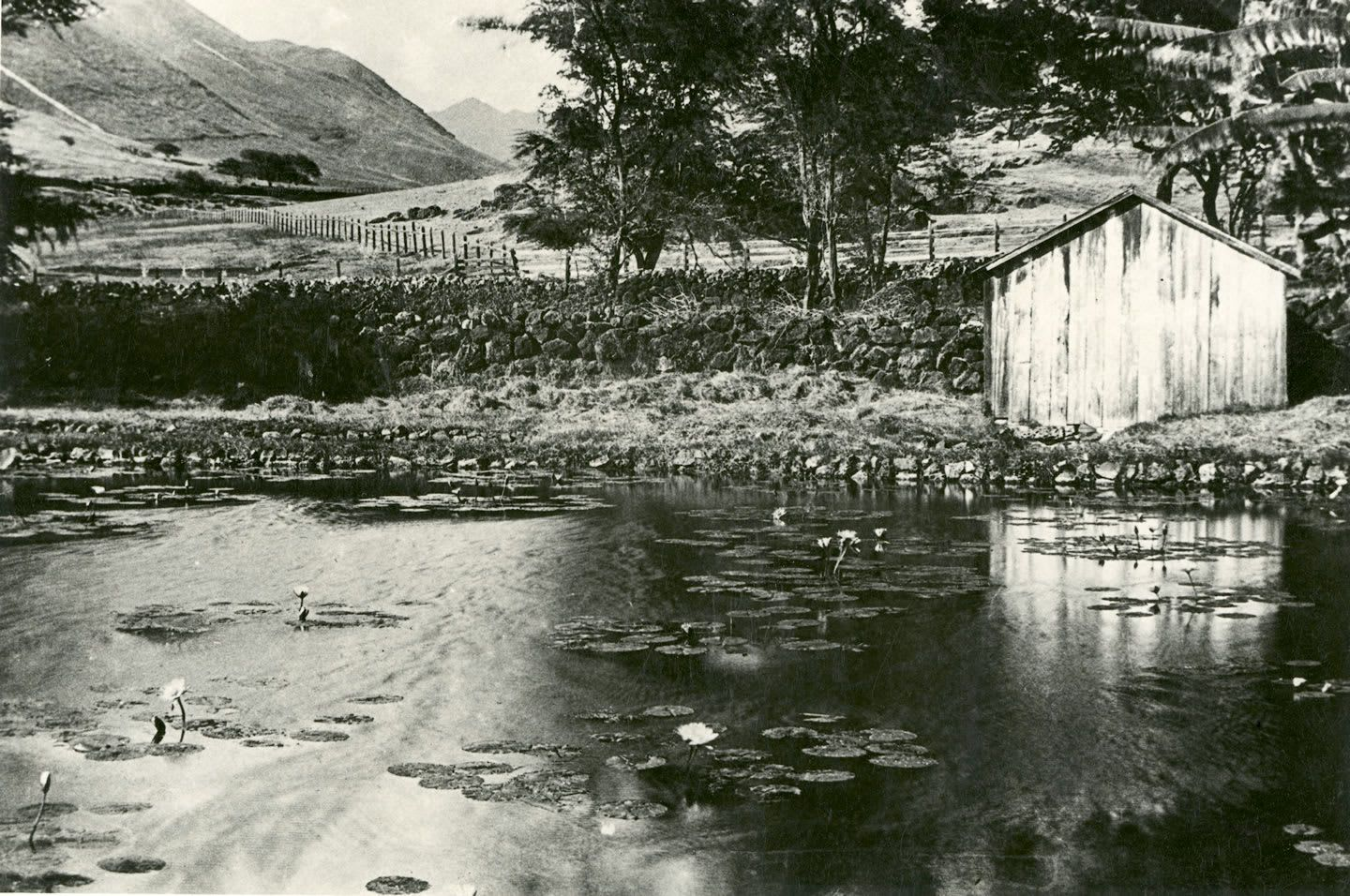 Punahou gets its name from the fresh water spring at the center of campus, Ka Punahou, which means the new spring. It is a symbol of enduring history as well as renewal.