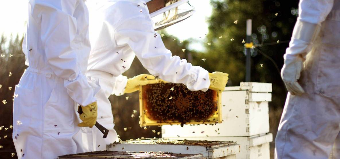 """When I was little I was afraid of bees, which is why I find it so funny that one of my favorite places on campus is the apiary. Of course wearing the bee suit helps."""
