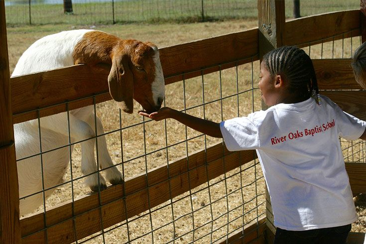 After being immersed in the study of farm life, Kindergarteners experience it for themselves at Oil Ranch.