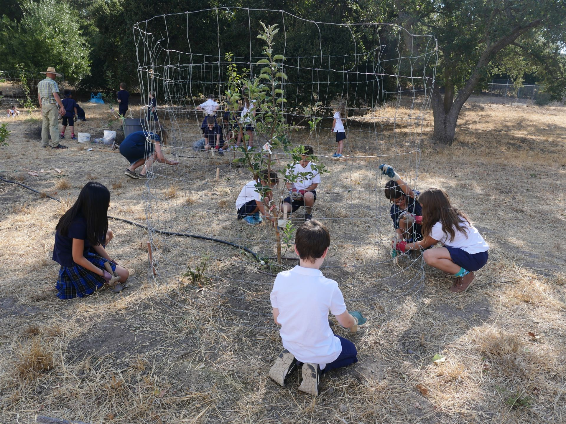 Hillbrook 5th grade cares for the apple trees in our on-campus orchard during Hillbrook's Week Of Service.