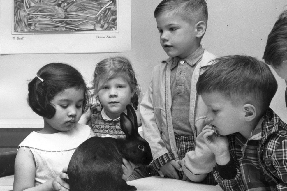 Admiring a Beauvoir rabbit.