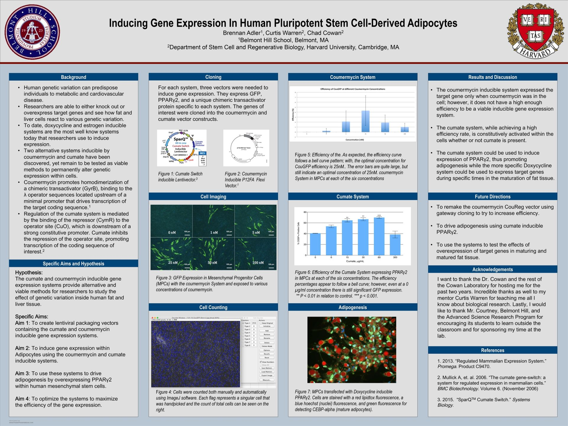 Brennan Adler-Inducing Gene Expression in Human Pluripotent Stem Cell-Derived Adipocytes