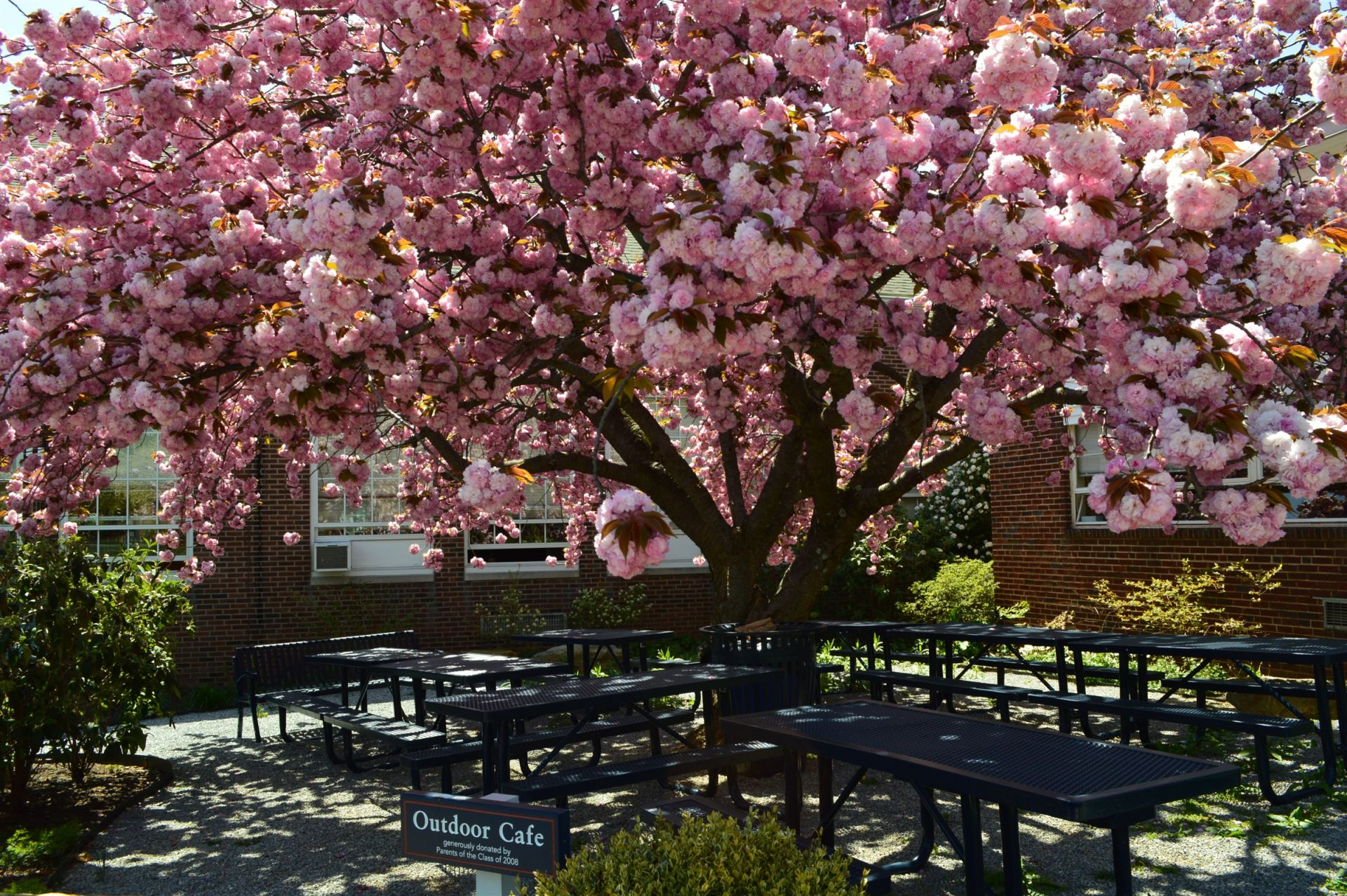 The outdoor picnic area provides a beautiful outdoor setting for seniors to eat lunch and for classes to take place.