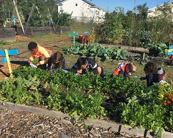 Middle schoolers work in the garden at Capital Area Food Bank.