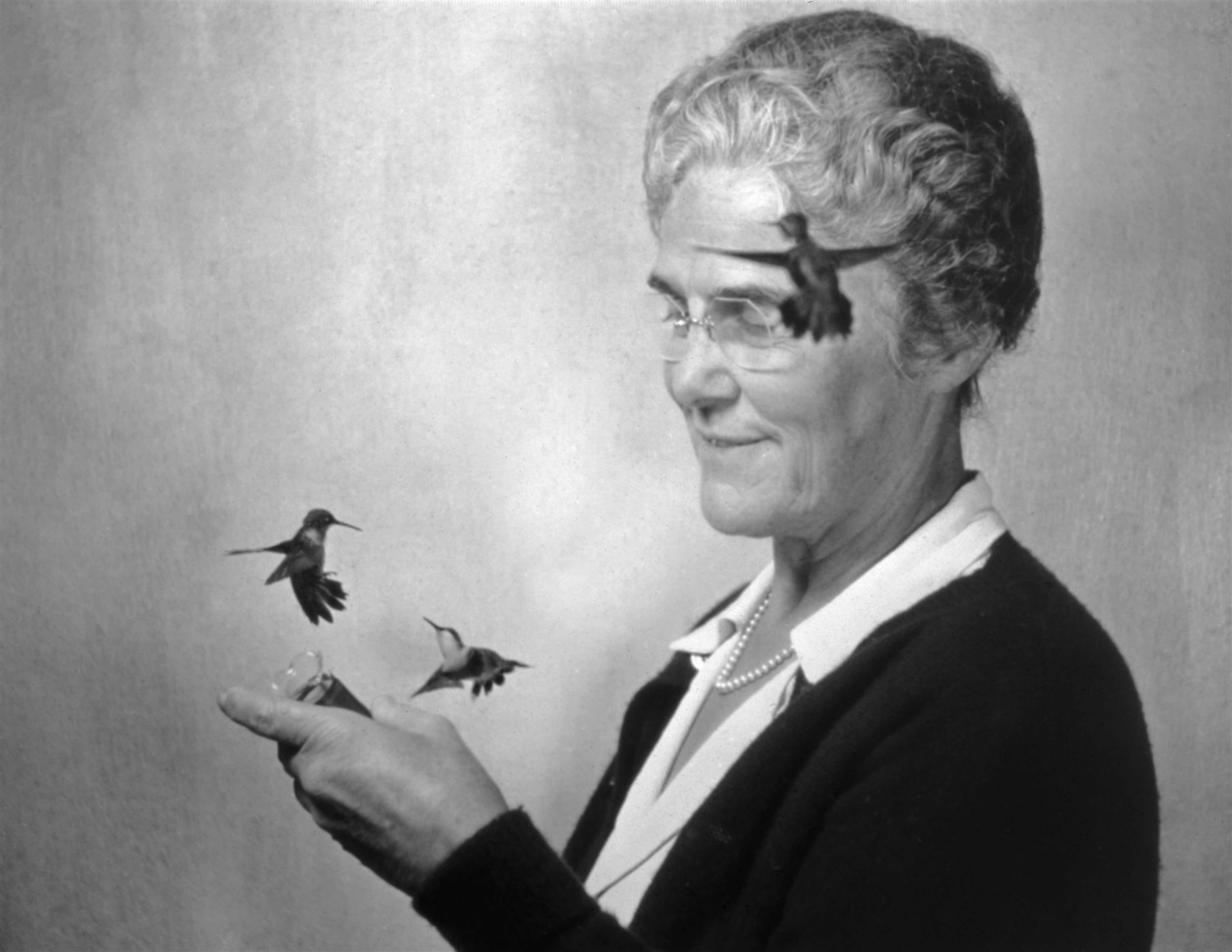<i>Mrs Webster and Her Hummingbirds,</i> 1936<br> gelatin silver print<br> 12 x 13 inches<br> In 1936, at the urging of his friend and mentor, Vannevar Bush, Edgerton first visited the home of Mae and Laurence Webster in Holderness, New Hampshire. Mae Webster had created a paradise for hummingbirds, even training them to feed from hand-held vials, as seen in this photograph. Edgerton became a frequent visitor to Holderness, making photographs and motion pictures of the hummingbirds and other birds in flight. When his photographs began to appear in National Geographic and other publications, bird photographers sought his advice in adapting the stroboscopic technique to their own work. The exposure of l/l00, 000th of a second, not possible before Edgerton's electronic flash, caught this first picture of hummingbirds in action. Since their wings beat sixty times per second, accurate observations of hummingbirds' activities had previously eluded naturalists.