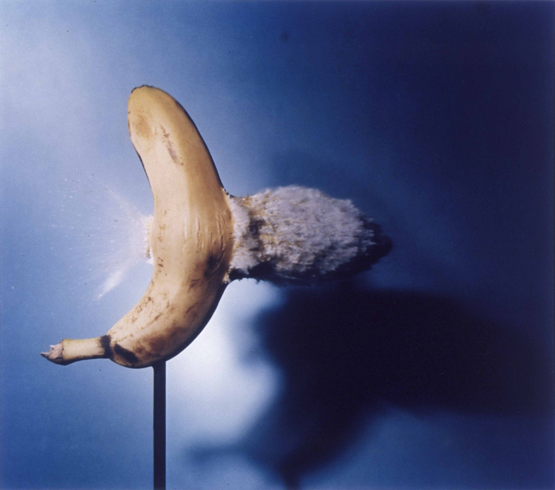 <i>Bullet Through Banana,</i> 1964<br> dye transfer<br> 14 x 16 inches