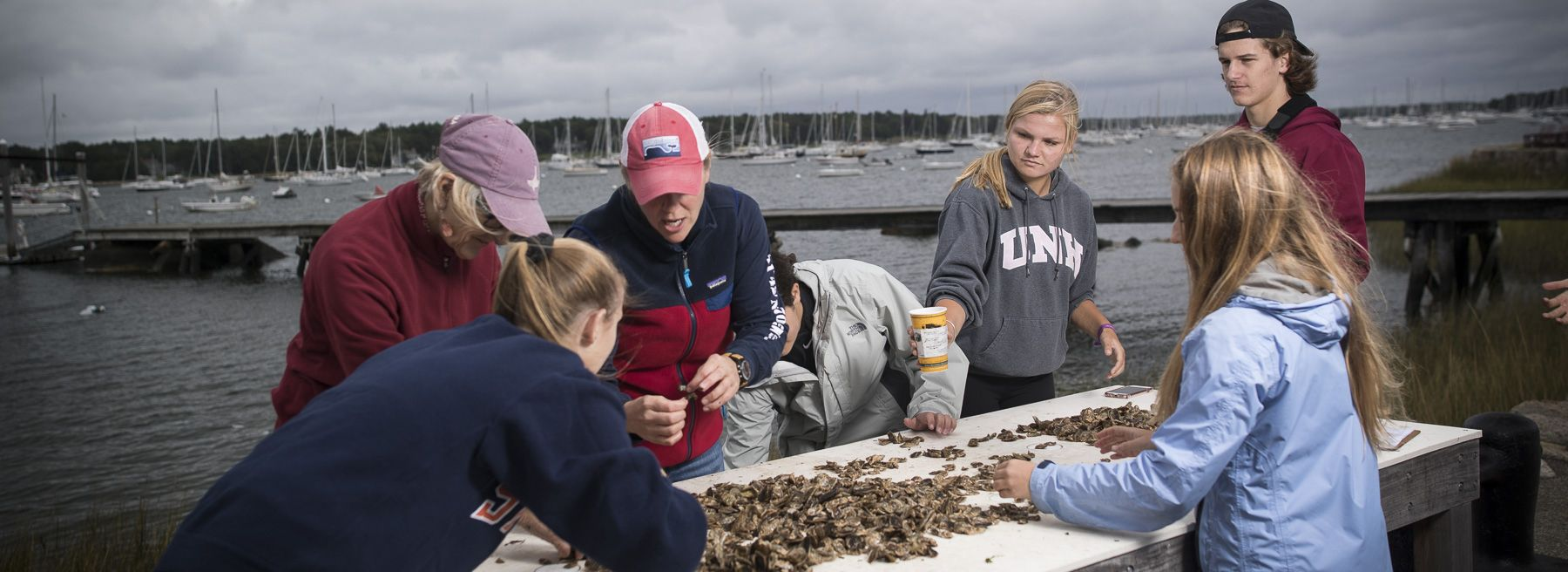 Student sort oysters by size at Tabor Academy's Oyster Farm on Sippican Harbor