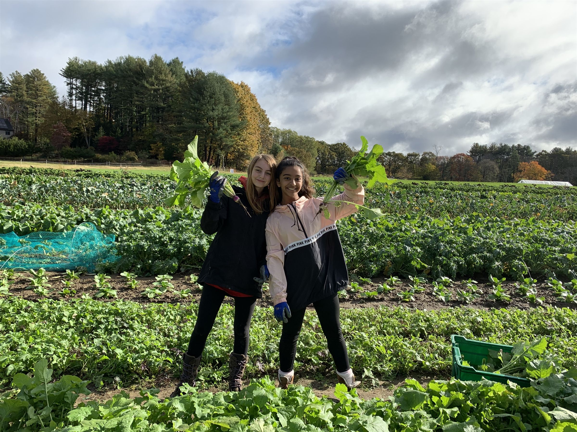 Seventh grade students volunteering at a local farm during their week of service in the fall.