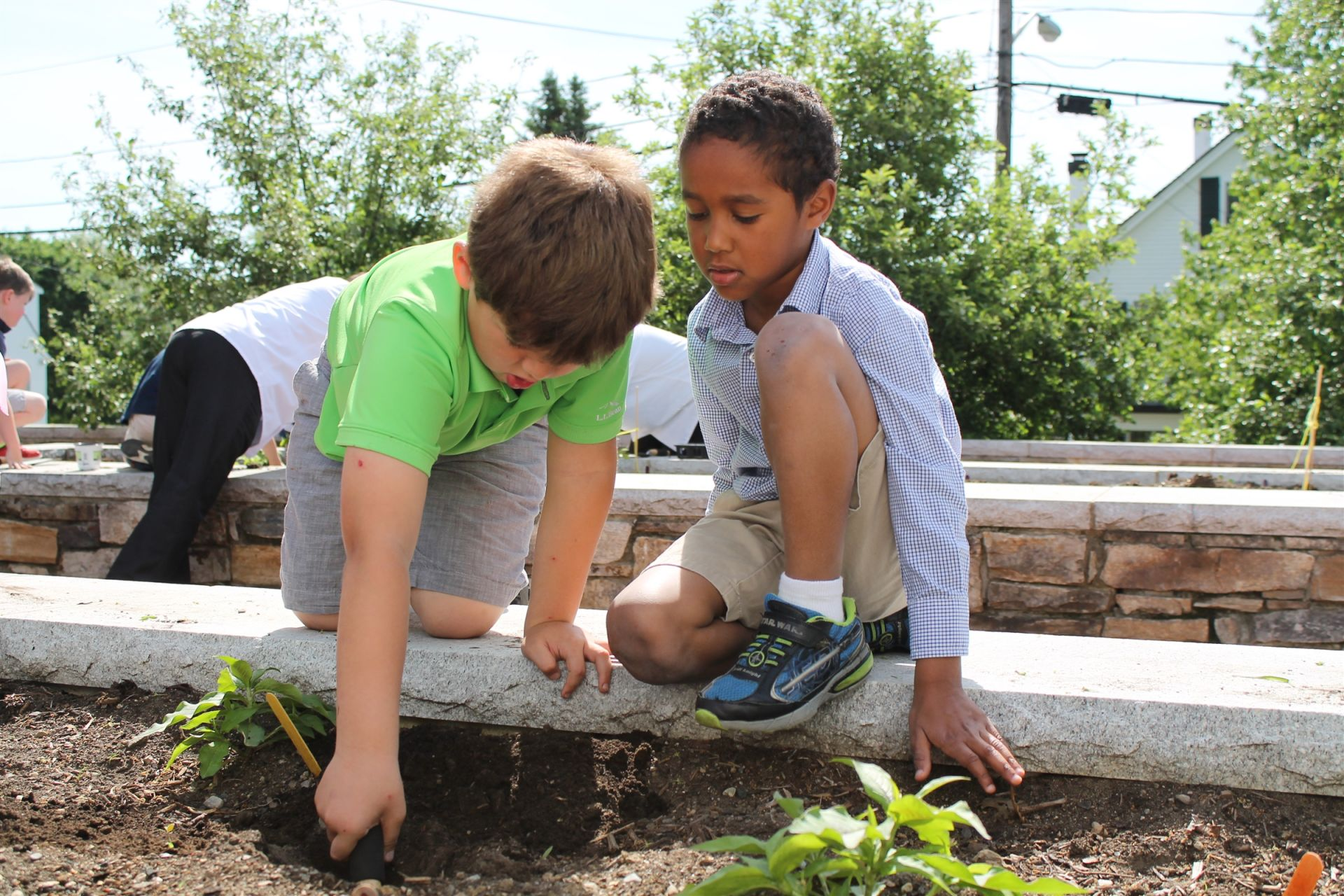 In Pre-K and Kindergarten, art and science are taught as a single subject as students build observational skills, learn about the world around them, and use scientific language to express their ideas. Students work in small groups to complete experiments and in-class presentations, and we take advantage of the raised garden beds in our outdoor classroom. Here, students planting herbs for the fall, which will be used by our kitchen staff for cooking.