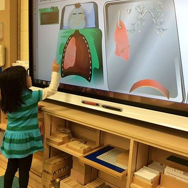 Studying the human body at Montessori Private School #Toronto #MontessoriElementary #AccreditedMontessoriSchools