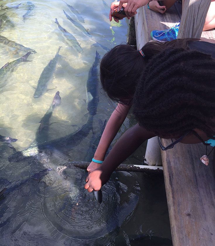 "Middle School students feed tarpon in Florida through the hands-on ""Splash into Science"" global trip."