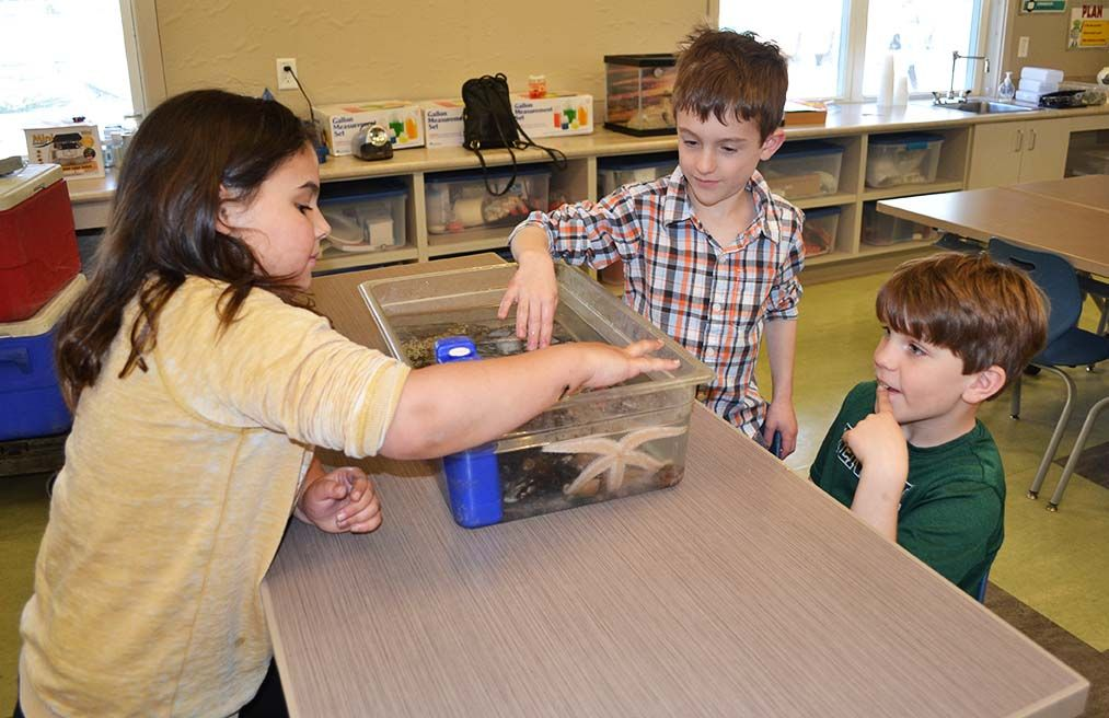 Second-graders participated in a hands-on tour of a live tide pool from the New England Aquarium.