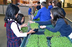 Students at the LFCDS Farmers Market