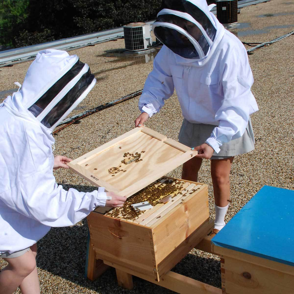 St. John's Eco Club is responsible for the care and maintenance of the honeybee colony on campus.