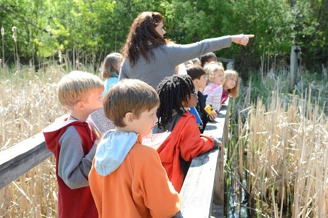 Green. Lower School students count red-winged blackbirds in the cattail marsh during the spring migration.
