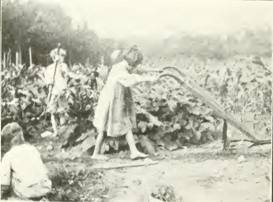 From 1917 until 1923, the School owned a farm in Hopewell Junction, NY. Children worked the farmed, studied science, and enjoyed time outside the city.