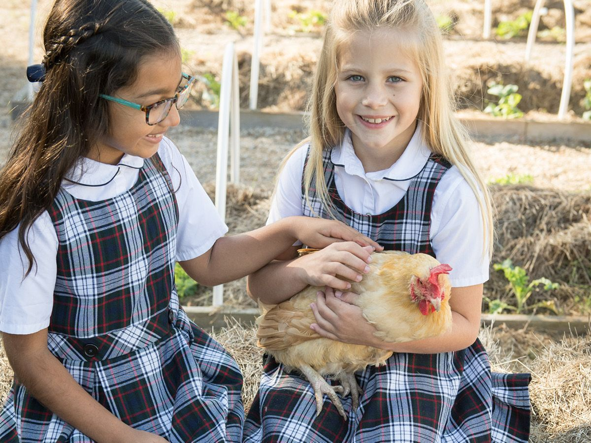 2nd grade students learn to care for the chickens on the Learning Farm