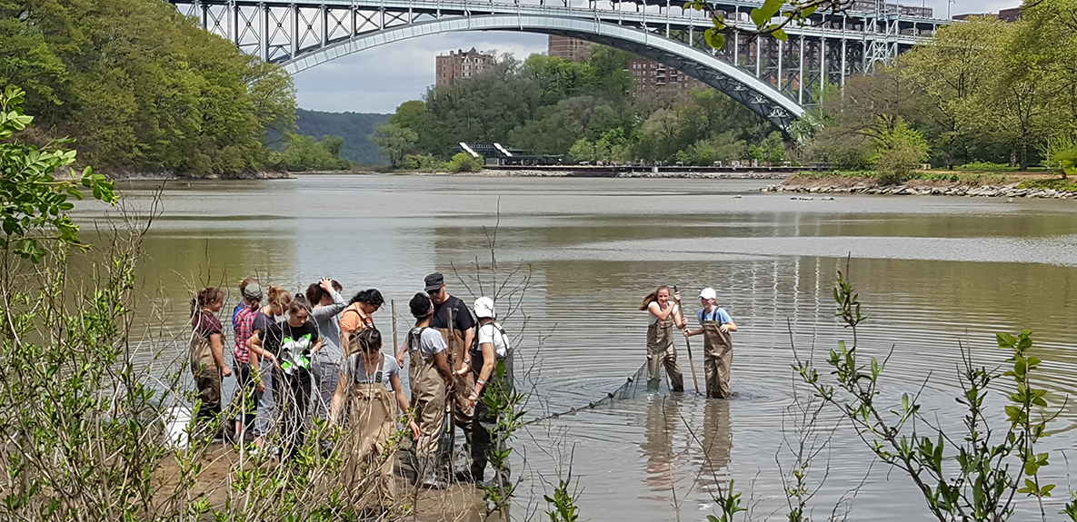 As a part of their Water Unit studies, Grade 8 students test water quality and catch, classify and identify fish and invertebrates at Inwood Park.