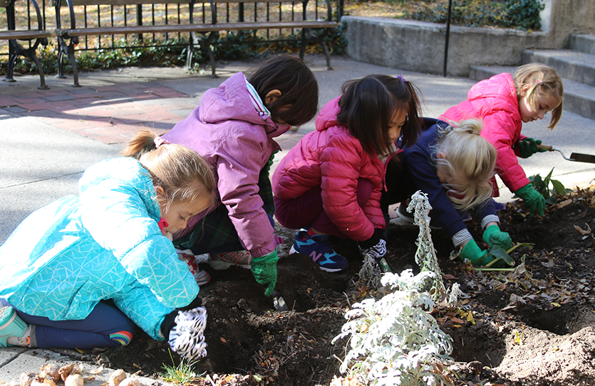 The Kindergarten class plants bulbs at Rupert Park as a part of a service learning project.