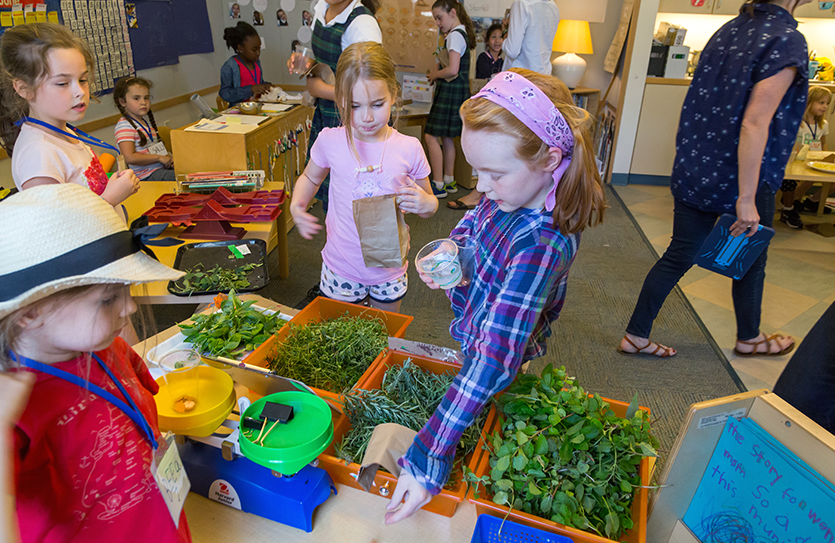 The Kindergarten farm-to-table unit culminates with students running a Farmers Market that features the herbs they have grown in the outdoor teaching lab.