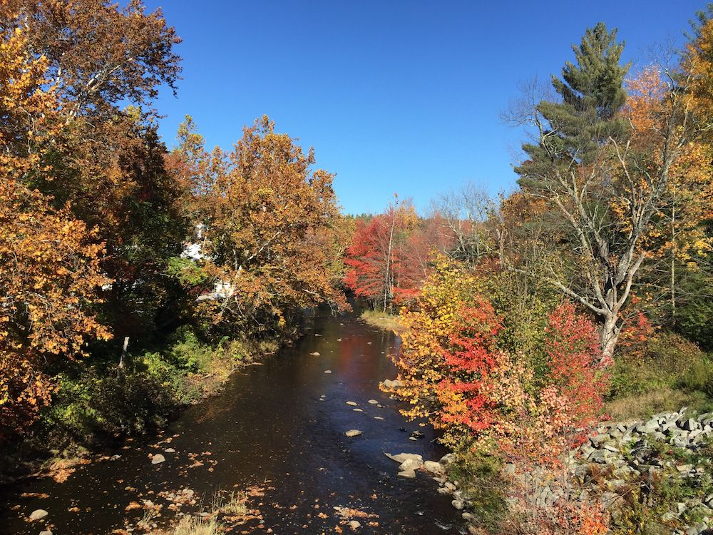 Foliage along the Souhegan River, which abuts the recently conserved Frye land