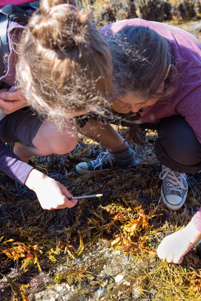 Ellie Sienkiewicz '17 and Noa Sadeh '17 work to identify a type of seaweed.