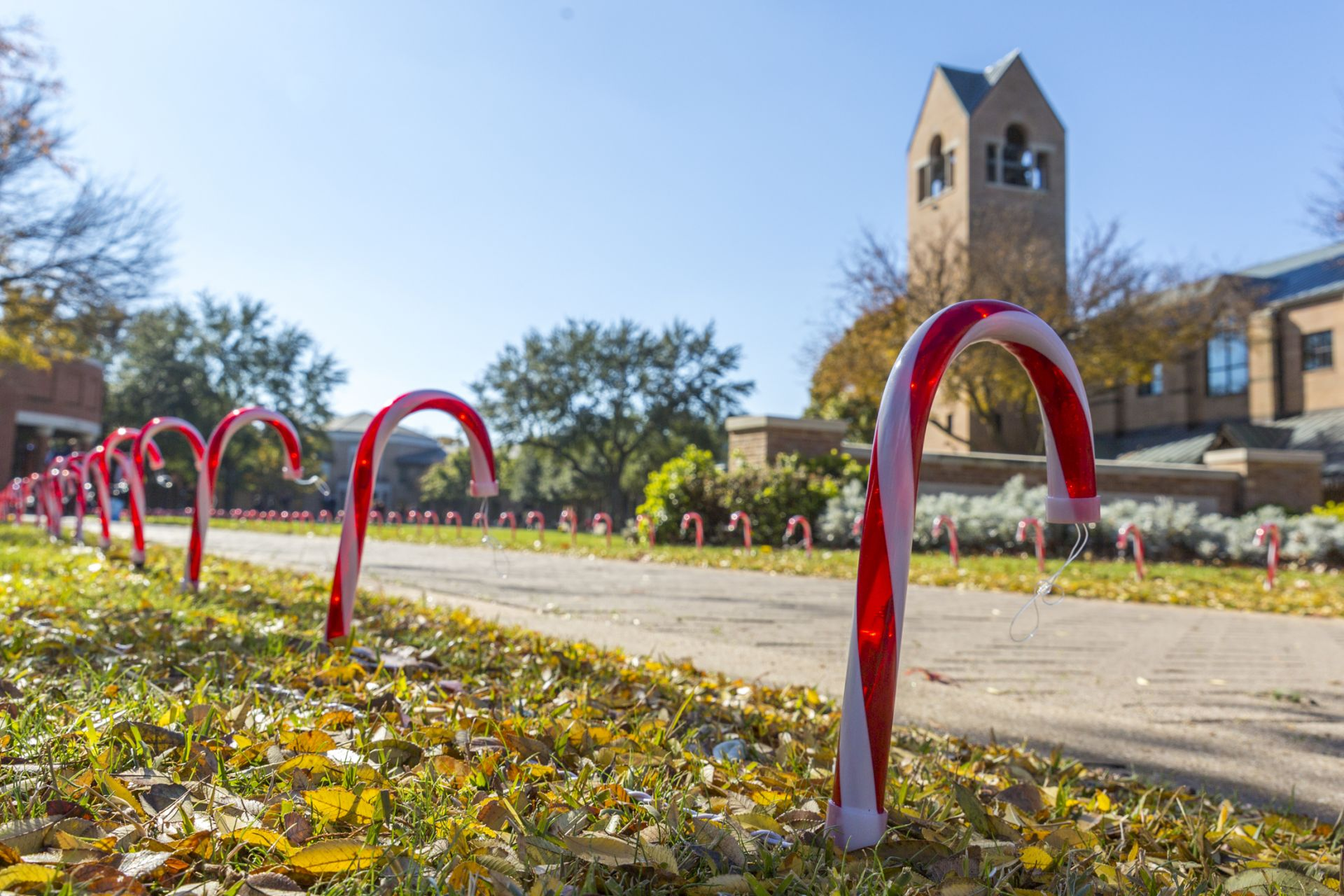 Seniors decorate the campus for Christmas on the Sunday following Thanksgiving.