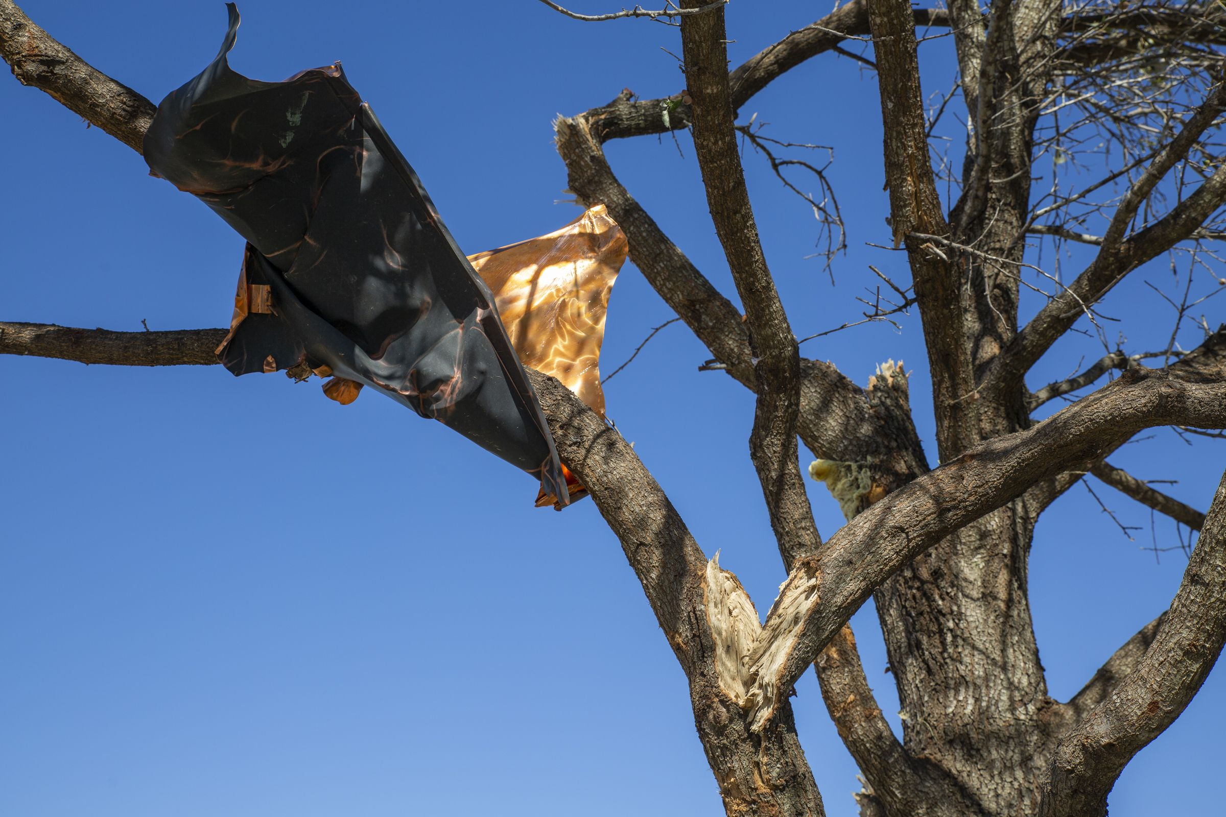High winds wrapped a piece of copper roofing around a tree branch several hundred feet away.