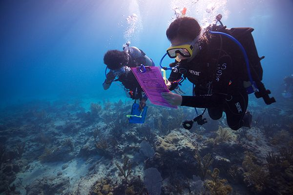 Students scuba diving doing marine research