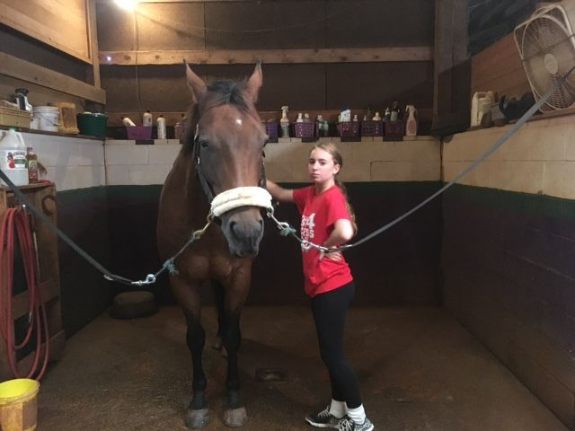 8th visits Montanova to learn about horses and jousting