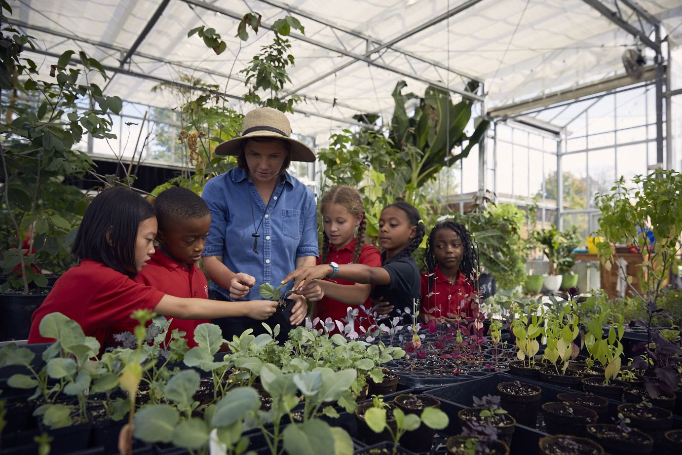 Students manage the watering, planting, and overall care of the plants in the greenhouse. Learning about germination, plant genes, and optimal environmental factors for the seedlings to thrive.