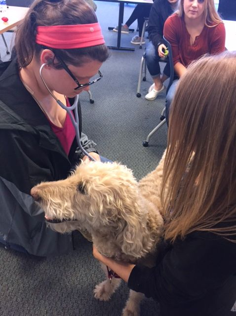 Students explore careers in veterinary medicine and nutrition at Royal Canin.