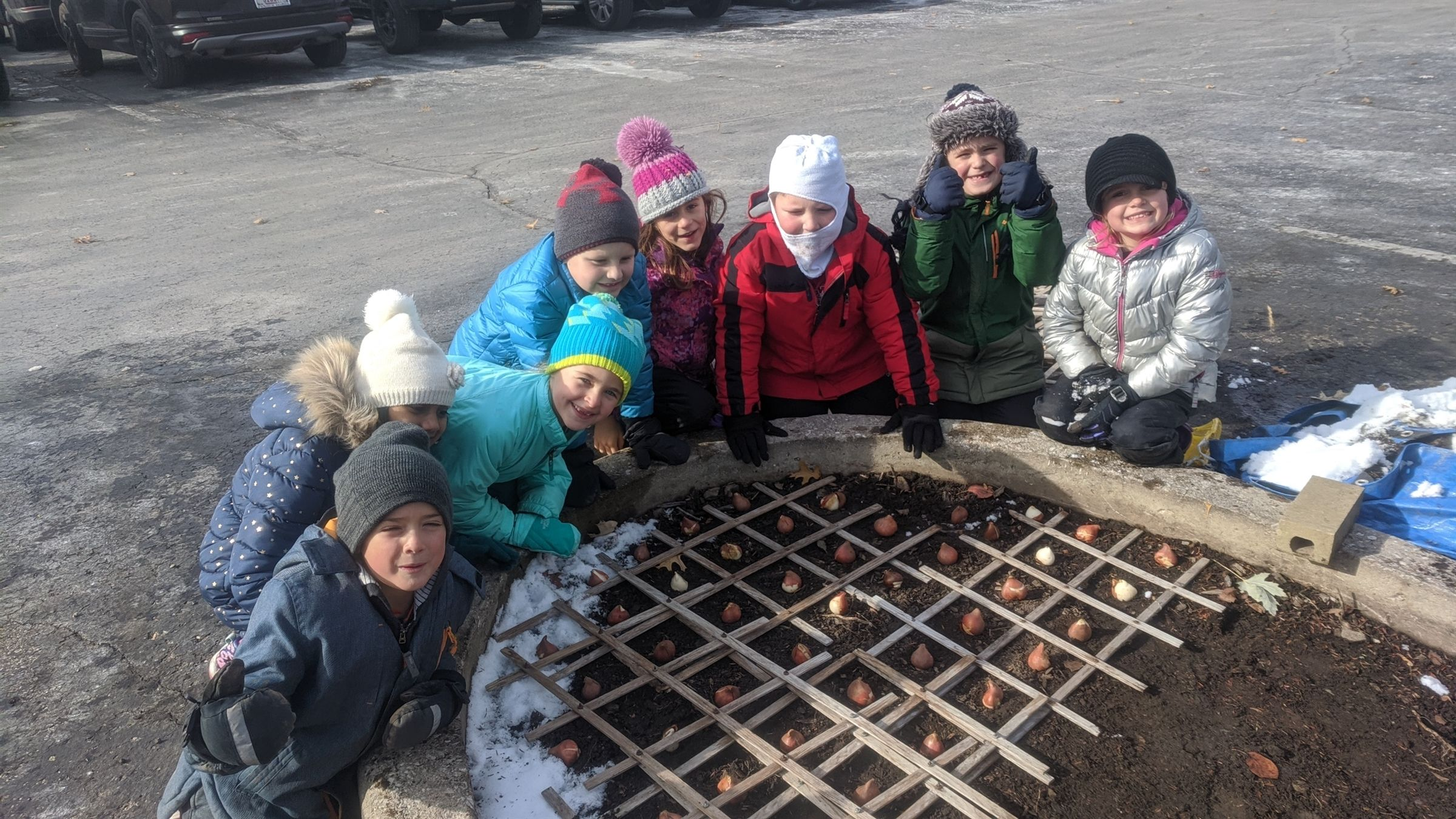 "Next the first graders measured the bed then determine how many tulip bulbs would be needed. Their answer, ""One thousand tulip bulbs!"" After that, a grid was set down and bulbs were planted with the proper space for them to grow."