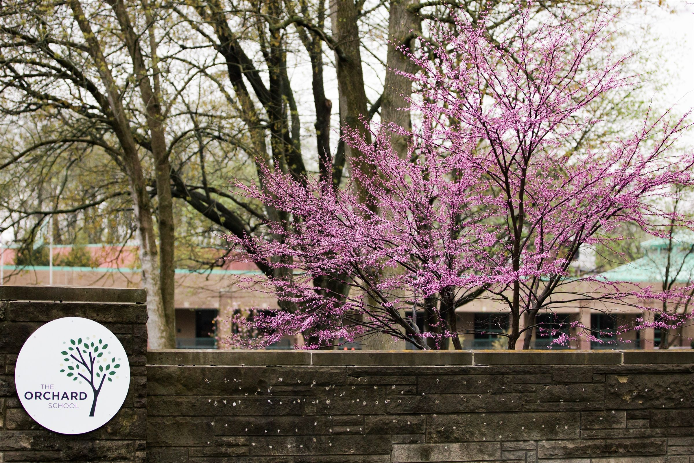 This photo was taken the day this redbud bloomed. It only lasts about a month until it's back to green.