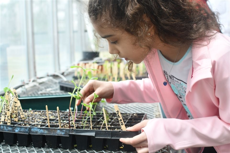 A student working in the school's greenhouse
