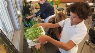 Middle School Aquaponics