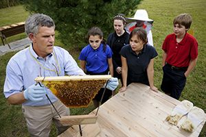 Middle School students viewing a bee hive with their teacher.