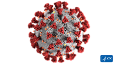 This image from the CDC shows the form of a coronavirus under an electron microscope.