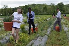 On Saturday, members of the Freshmen Class volunteered at JK Community Farm . . . (Photo by Georgia R. '22)