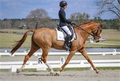 Olivia D. '20 has been riding well in Aiken, SC, as she trains with her dad, Phillip Dutton.