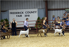 Sophomore Quinna M. (second from right) has a passion for raising and showing livestock, and has been involved with her local 4-H Club since she was nine years old.