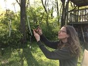 USN parent Joanna Brichetto pollinates a Pawpaw tree that she planted from a seed seven years ago.