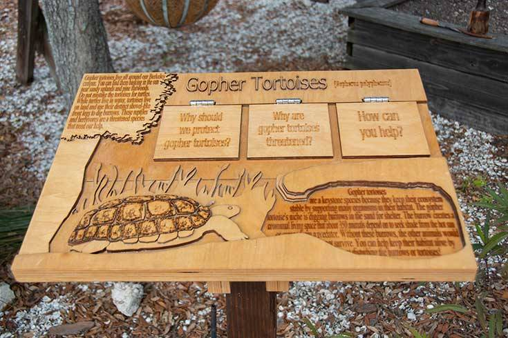 Gopher tortoises Board